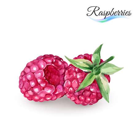 Illustration pour Hand-Drawn Watercolor Painting Raspberry on White Background - image libre de droit