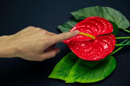 Photo pour blurred male hand touches a red tropical flower on a black background, sex concept - image libre de droit
