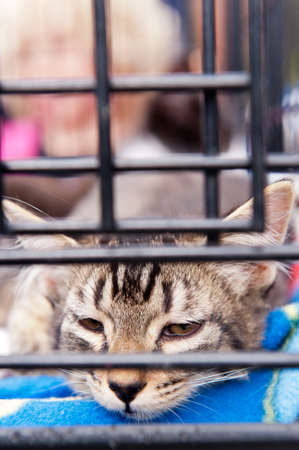 A tabby striped cat resting in a cage