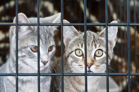 Two orphan tabby kittens waiting in a cage