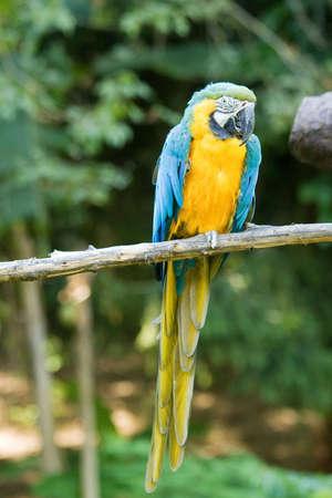 Foto per pappagallo ara allo zoo - Immagine Royalty Free