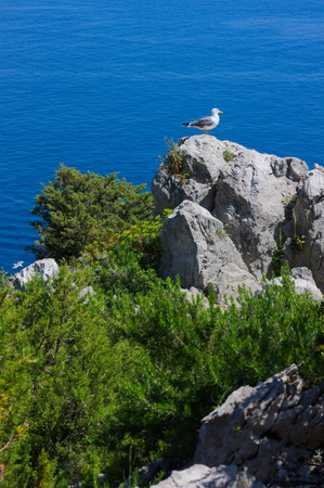 paradise island-XI-Capri-Italy