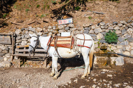 horse used to transport tired tourists in Samaria Gorge in central Crete, Greece