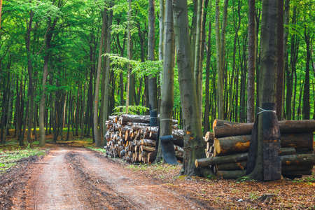 Photo for pile of wood in the green forest - Royalty Free Image