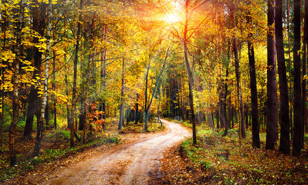 Foto de Autumn forest landscape on sunny bright day. Vivid sunbeams through trees in forest. Colorful nature at fall season - Imagen libre de derechos