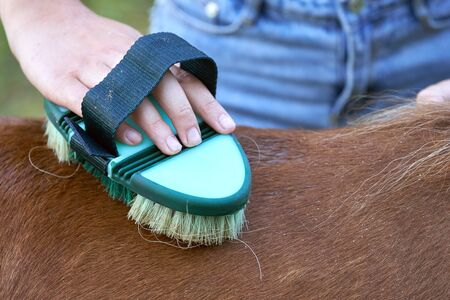 Teenage girl\'s hand brushing a back of pony horse on close up outdoors. Friendship and a care for the animal