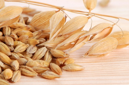 Oat stems with seeds on a wooden background