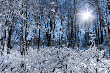 Night view of trees covered with snow in a city park. The bright light of the lantern. Snowfall. Forest fairy tale before the new year.