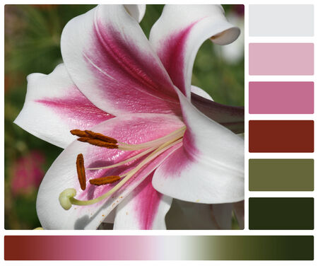 Lily Flower. Palette With Complimentary Colour Swatches