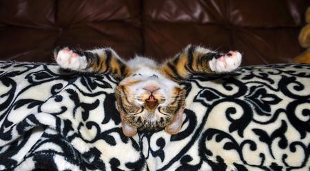 Tabby kitten deep asleep on the couch