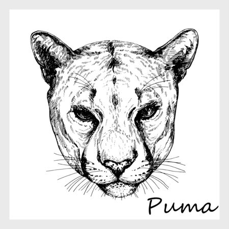 Illustration pour Hand drawn sketch style portrait of puma isolated on white background. Vector illustration. - image libre de droit