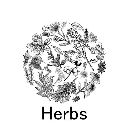 Illustration pour Poster card composition of hand drawn sketch style different kinds of plants isolated on white background. Vector illustration. - image libre de droit
