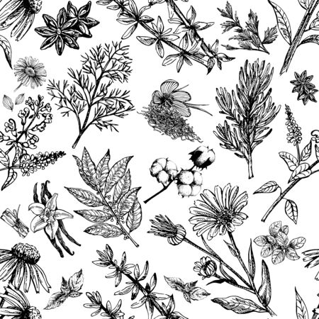 Illustration pour Seamless pattern of hand drawn sketch style different kinds of plants isolated on white background. Vector illustration. - image libre de droit