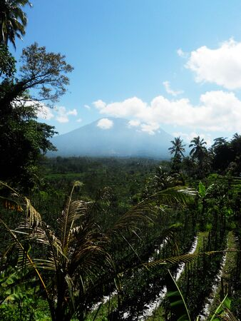 Balinese landscape with agriculture and distant volcano