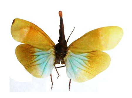 Beautifully colored flying insect