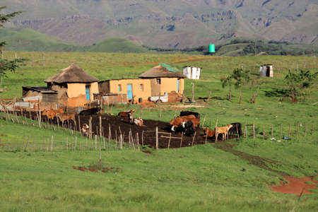 Small rural huts with cattle, South Africa