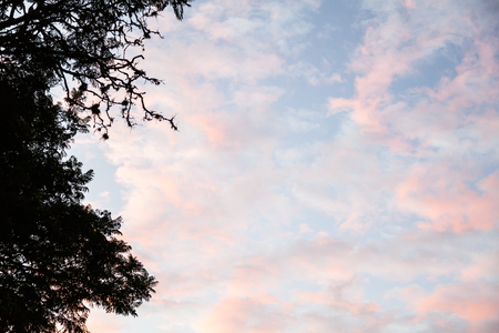 Clouds of orange and red shades of pink on a blue sky framed by a tree branch