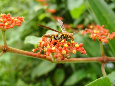 una avispa en la flor