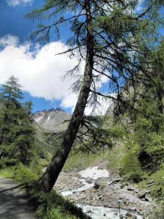 A spruce in the mountains, blue sky and white clouds. Wildly creek, snow residues and scree