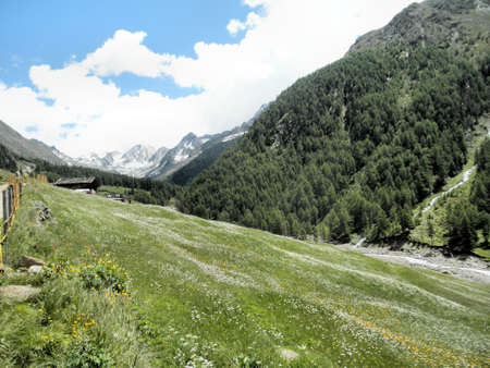 In the Pfossental in South Tyrol and in background the mountains of the Oetztal Alps; colorful flower meadows