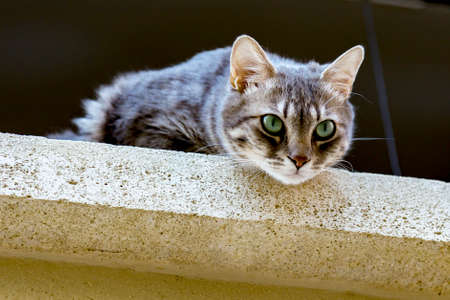 Inquisitive cat