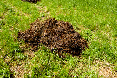 Manure - waste product of livestock. Used as a natural fertilizer or fuel.