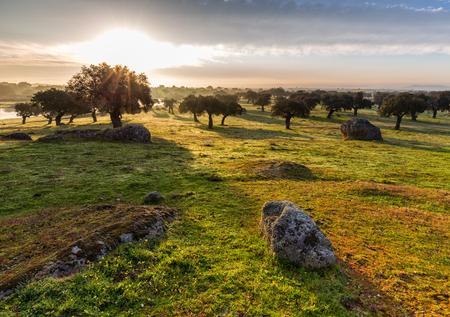 Dawn in the dehesa de Arroyo de Luz. Extremadura. Spain.