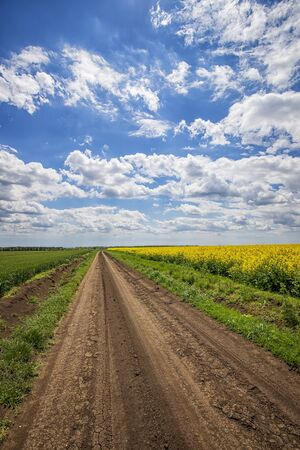 Photo for Scenic view on the country road between rapeseed and wheat fields. Vertical view - Royalty Free Image