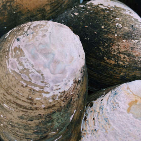 Close up of clam shells