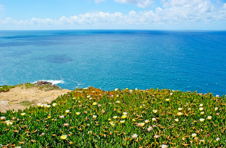 The carpet of hottentot-fig plants cover the cliff, rising above Atlantic ocean and forming the westernmost point of Europe - Cabo da Roca, Sintra, Portugal.