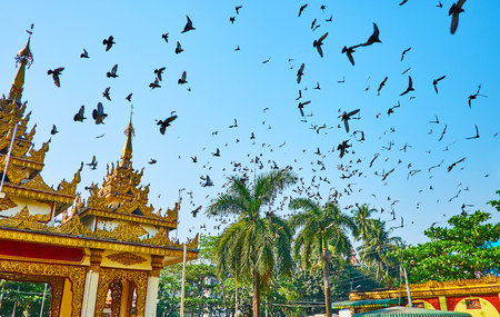 The flock of pigeons flies over the scenic gate of Kyay Thone Pagoda, Buddhist worshipers often feed birds here, so such flights are regular, Yangon, Myanmar.
