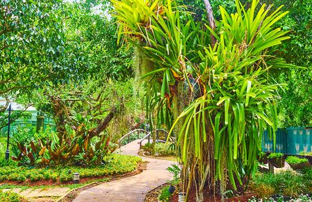 Photo for Walk the narrow curved alleyway of orchid garden, enjoy the shade and lush greenery, Rajapruek park, Chiang Mai, Thailand - Royalty Free Image