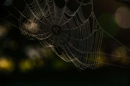 Photo pour cobwebs in the morning mist. Juicy greens. - image libre de droit