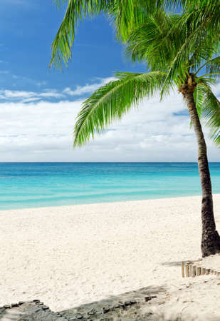 Photo for Tropical white sand beach with palm trees. - Royalty Free Image