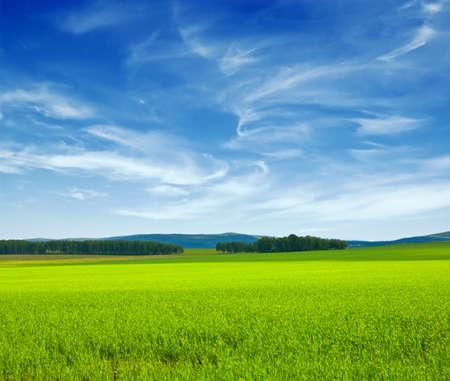 Beautiful summer landscape. Sky and grass.