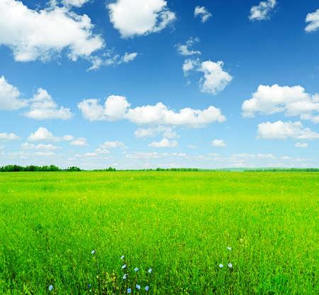 Summer landscape. Sky and green grass.