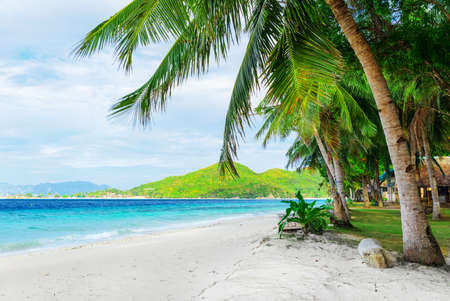 Green tree on  white sand beach  Malcapuya island, Palawan, Philippines