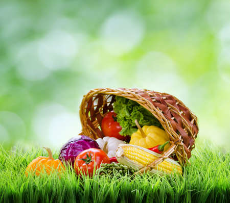 Fresh vegetables in the basket on green grass.