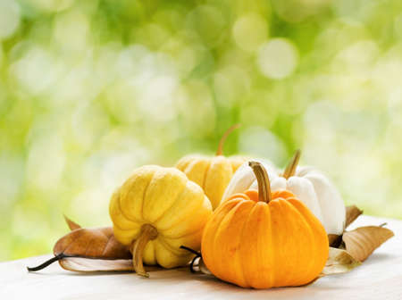 Photo for Pumpkins on green natural background. - Royalty Free Image