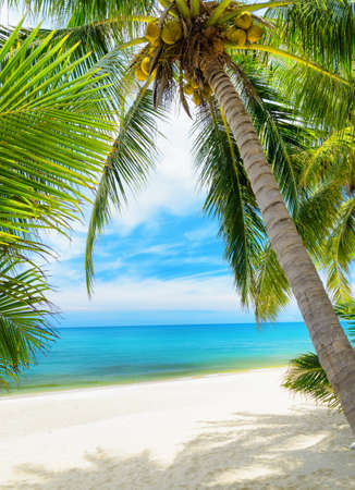 Photo for Green tree on a white sand beach  - Royalty Free Image
