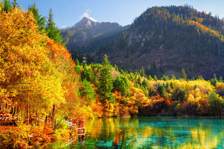 Fantastic view of the Five Flower Lake (Multicolored Lake) among colorful fall woods in Jiuzhaigou nature reserve, China. Autumn forest reflected in azure water. Snow-capped mountains in background.