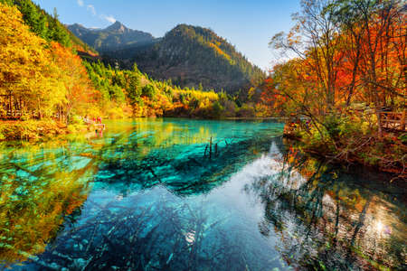 Photo pour Fantastic view of the Five Flower Lake (Multicolored Lake) with azure water among fall woods in Jiuzhaigou nature reserve (Jiuzhai Valley National Park), China. Submerged tree trunks at the bottom. - image libre de droit
