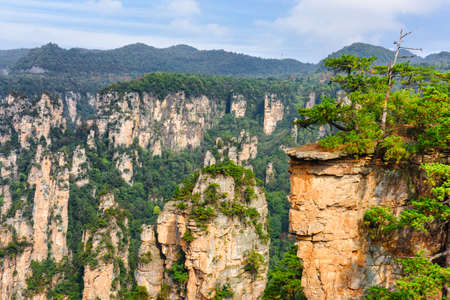 Photo pour Awesome view of green trees growing on top of rock in the Tianzi Mountains (Avatar Rocks), the Zhangjiajie National Forest Park, Hunan Province, China. Wooded mountains are visible in background. - image libre de droit