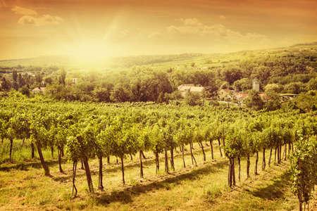 Vineyards landscape in Kamptal, lower Austria