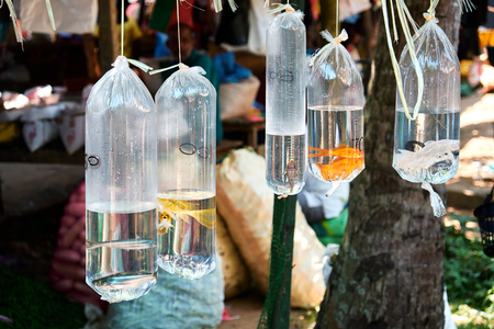 Photo pour Goldfish in Platic Bag Hanging Oriental Zoo Market. Tropical Street Retail Pet Shop for Aquatic Hobby. Traditional Asian Small Aqua Bazaar for City Tourism. Colorful Animal Trading - image libre de droit