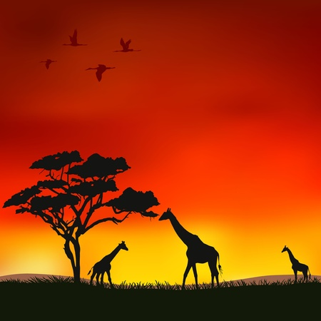Illustration for The figure shows the giraffes on a red background  - Royalty Free Image