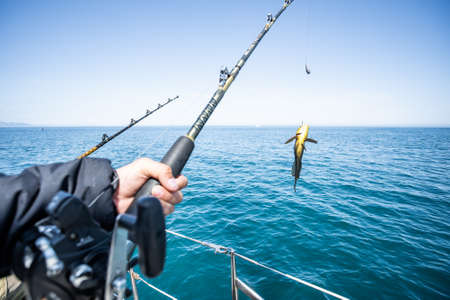 Photo pour Fish in the hand of an angler. Rasp Sea Fishing - image libre de droit