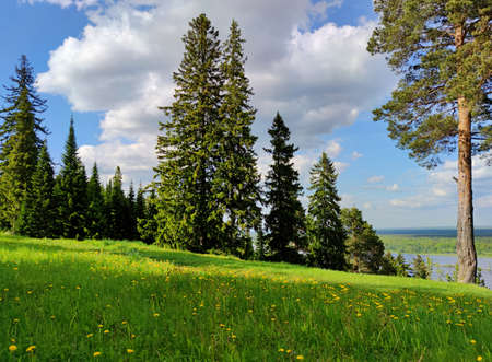 Photo pour lush green meadow on top of a slope with trees against a blue sky on a sunny day - image libre de droit