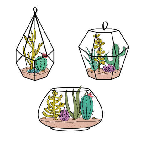 Vector set with colorful cactuses and succulents in terrariums.