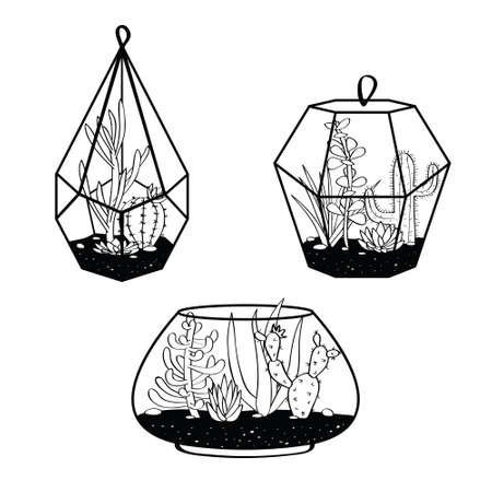 Vector set with black and white cactuses and succulents in terrariums.